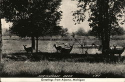 North Woods Deer Postcard