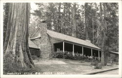 Mariposa Grove Big Trees Lodge