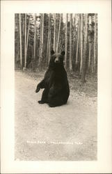 Black Bear in Road