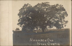 Monarch Oak