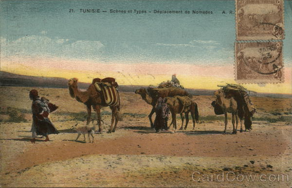 Camels in Desert Tunisia Africa Cancelled on Front (COF)