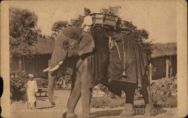 A state elephant Kochi India Clifton