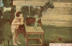 "Boy Drinking Directly from Goat, ""Stolen Sweets"""