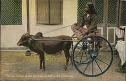 Singhalese race bull and cart, Colombo