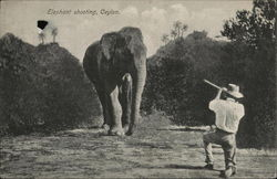 Elephant shooting, Ceylon.