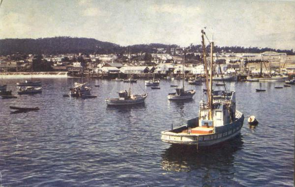 Fishing Fleet At Anchor Monterey Harbor California
