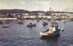 Fishing Fleet At Anchor