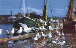 Feast Of The Gulls