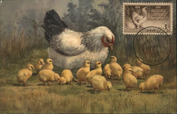 Hen with Baby Chicks Birds Maximum Cards