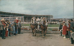 Western Washington Fair - Draft Horse Team