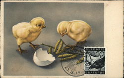 Two Baby Chicks Looking at Eggshell