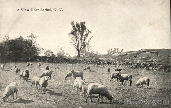 A View Near Bethel, N. Y. - Animals Grazing