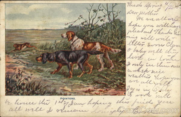 Pointers Hunting Dogs