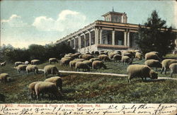 Mansion House & Flock of Sheep
