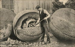 Man Shoveling Out Seeds from Giant Cantelope