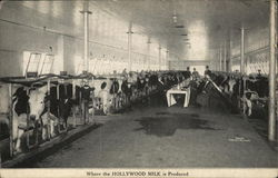 Where the Hollywood Milk is Produced.