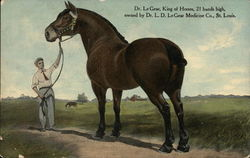 Dr. LeGear, King of Horses