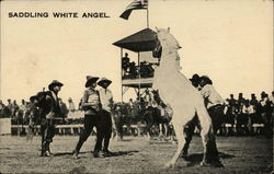Saddling White Angel