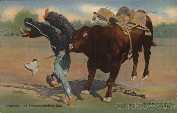 Sharkey The Famous Bucking Bull Rodeos Postcard