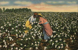 Romeo and Juliet in Cotton Field