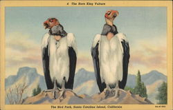 King Vultures, The Bird Park