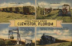 Greetings from Clewiston Postcard