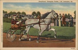 Greyhound, Champion Trotter, Lexington. KY