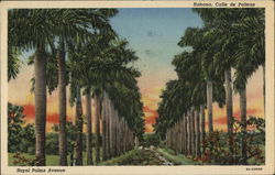 Royal Palms Avenue