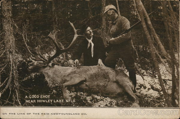 A Good Shot Near Howley Lake NFLD Canada Hunting