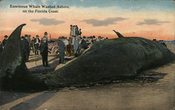 Enormous Whale Washed Ashore on the Florida Coast