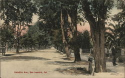Looking Along Estudillo Avenue Postcard