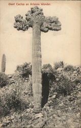 Giant Cactus - An Arizona Wonder