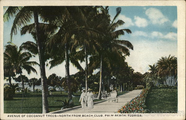 Avenue of Cocoanut Trees, North From Beach Club Palm Beach Florida