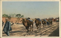 Camel Train, Peking