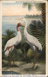 Wood Ibis and Whooping Crane