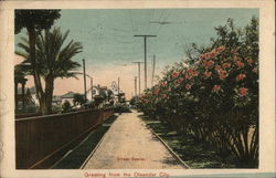 Street Scene - Greeting from the Oleander City Postcard
