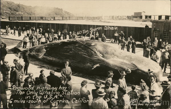 Redwood Highway Whaling Station - 60 ton Sperm Whale Eureka California