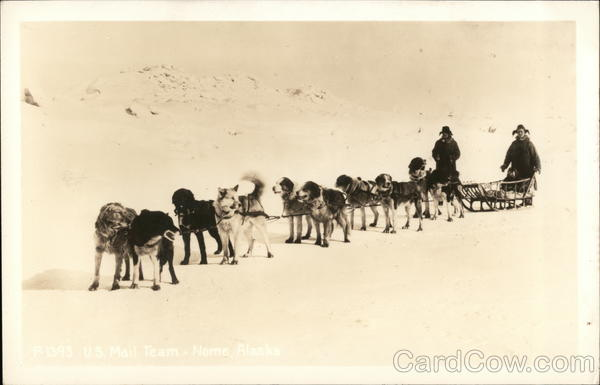 U. S. Mail Team - Line of Huskies Attached to Dog Sled Nome Alaska