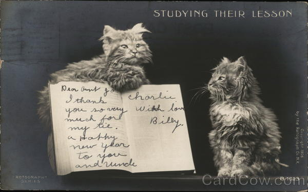 Studying Their Lesson - Two Cats Reading a Book