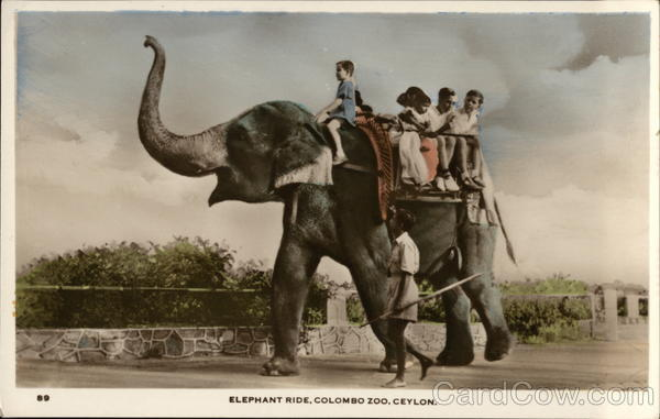 Elephant Ride at the Zoo Colombo Ceylon Southeast Asia