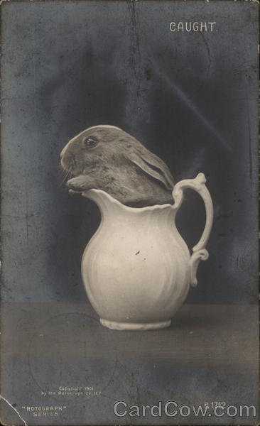 Caught - Rabbit in a Pitcher