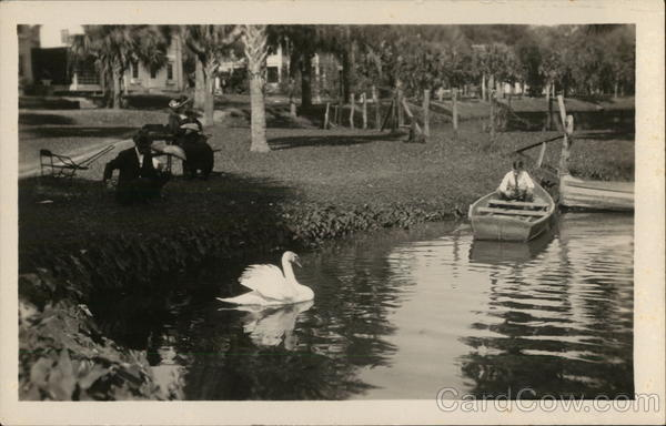 Person in Rowboat Near White Swan on Lake Lucerne Orlando Florida