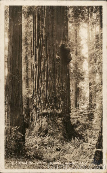 California Redwoods, Humboldt County