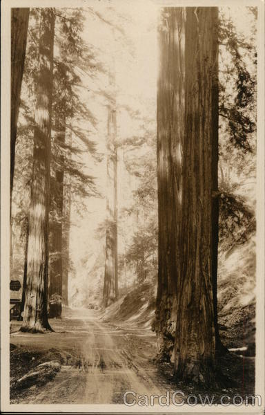 Lanes Redwood Flats Piercy California
