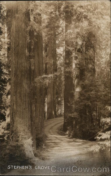 Stephen's Grove Miranda California