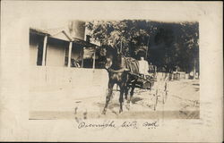 Woman Driving Buggy with One Horse