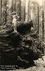 Woman Posing Provocatively on Huge Tree