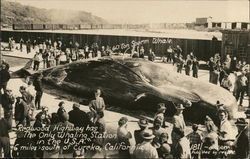 Redwood Highway Whaling Station - 60 ton Sperm Whale