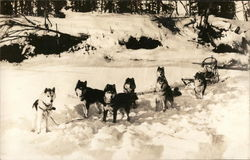 Team of Huskies Attached to Sled in the Snow