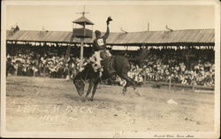 Cowboy Atop Bucking Horse with Large Rodeo Crowd